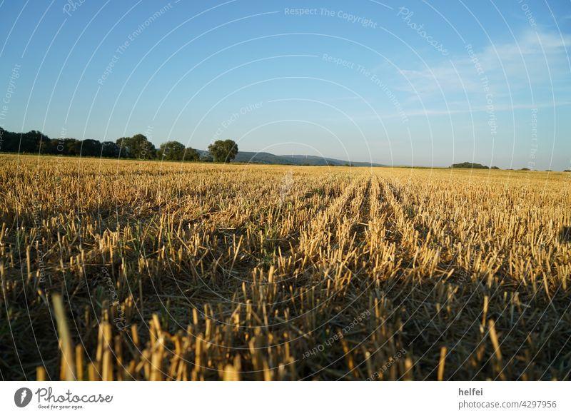 Mown grain field in midsummer with build sky scythed Meadow Field Summer Sky Landscape Hay Agriculture Grain field Clouds acre Cornfield Wheatfield Barleyfield