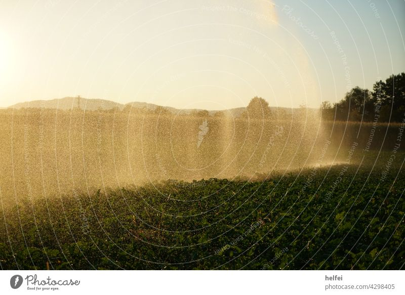 Irrigation of a field in summer Irrigated agriculture Agriculture Field Rain Sky Summer Grain Grain field Precipitation Cast Lawn sprinkler irrigation