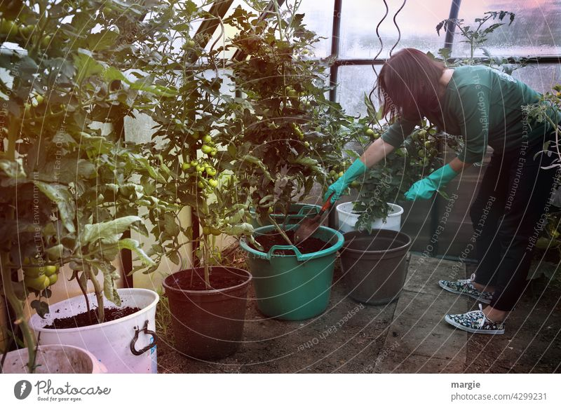 A woman in the greenhouse gardening! Woman Gardener Greenhouse Gardening Growth Fresh Vegetable Nature Plant Food Harvest Nutrition waxing tomatoes nurse