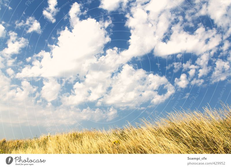 Sky Vacation & Travel Summer Sun Relaxation Joy Calm Clouds Far-off places Warmth Grass Freedom Horizon Dream Air Field
