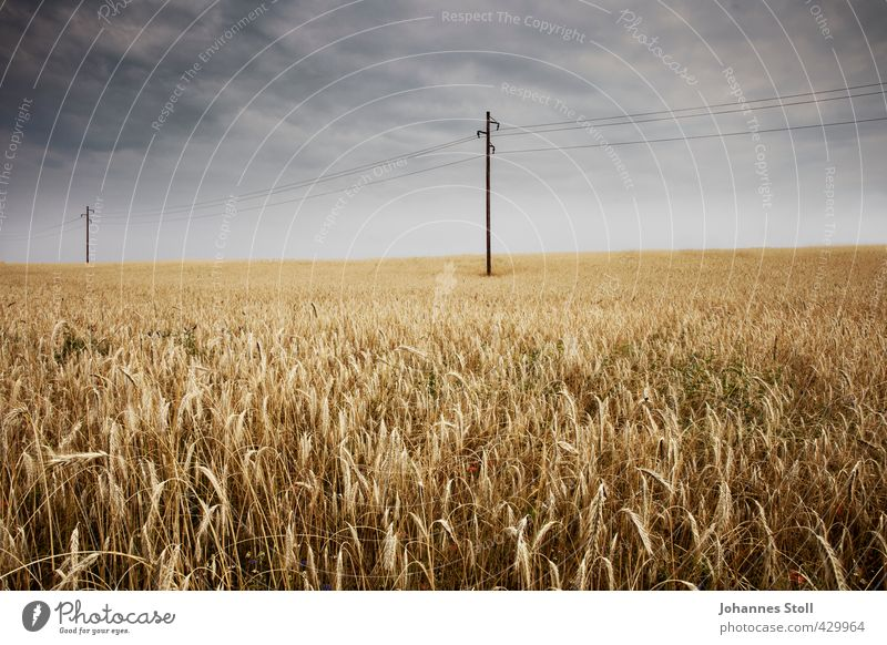 cornfield Agriculture Forestry Energy industry Landscape Earth Bad weather Plant Field Sustainability Yellow Nature Network Environment Rye
