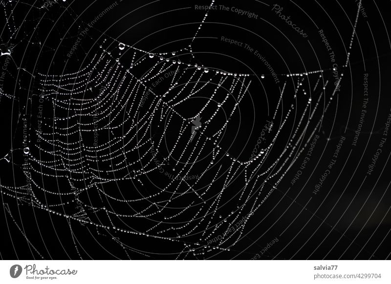 baptisers Nature Spider's web Drops of water Dew Black & white photo Macro (Extreme close-up) Net Wet Deserted Delicate Contrast
