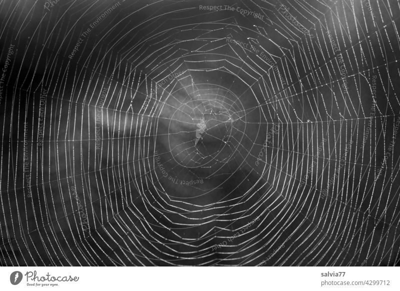 filigree work of art, spider web against the light Nature Spider's web Close-up Black & white photo bike net Net Delicate Art peril Back-light