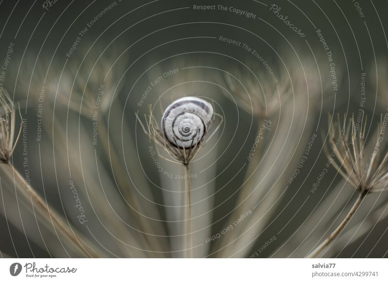 security Nature Crumpet Snail shell Close-up Protection Spiral Symmetry Structures and shapes Safety (feeling of) Central perspective Pattern Design Contrast