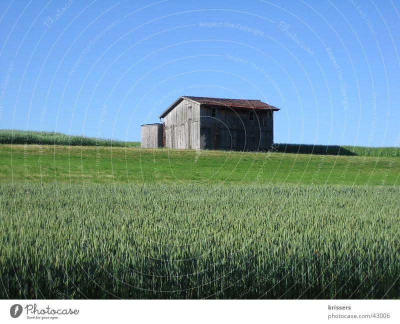 A shed Barn Field Blue Summer Sky Blue sky Calm Individual Grain field Deserted Storage shed Margin of a field