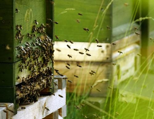 The busy little bees fly to the hive and gather there to exchange messages. Bee Insect Summer Nature Honey bee Animal Plant Garden Colour photo Diligent
