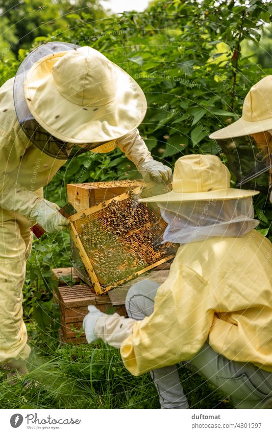 Training at the open beehive, people in beekeeper suits Bee Nature bees naturally Insect insects Animal Couple Protective clothing animals wildlife Pollen touch