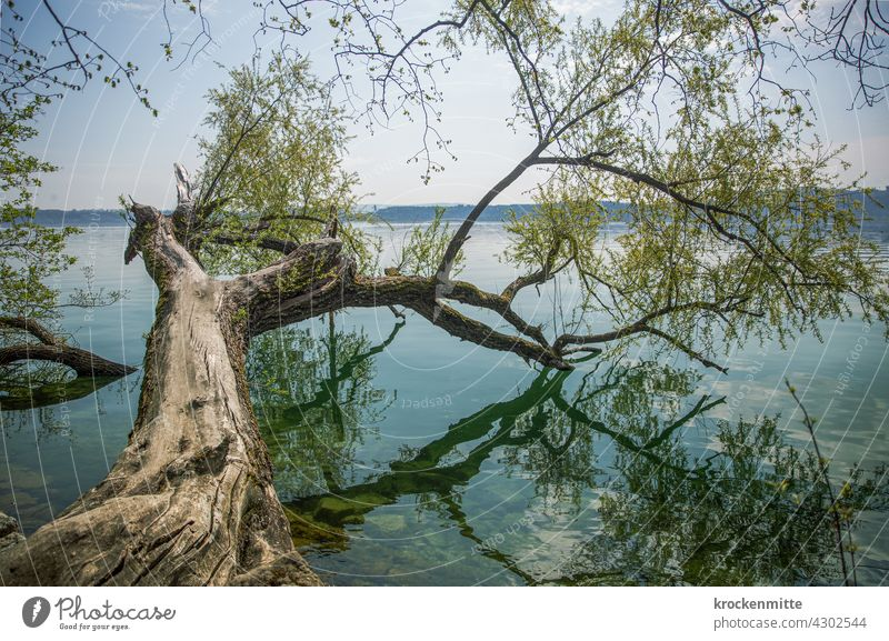Tree branch with green leaves juts into Lake Biel on St. Peter's Island reflection Green Nature Water Reflection Sky Environment Deserted Calm Surface of water