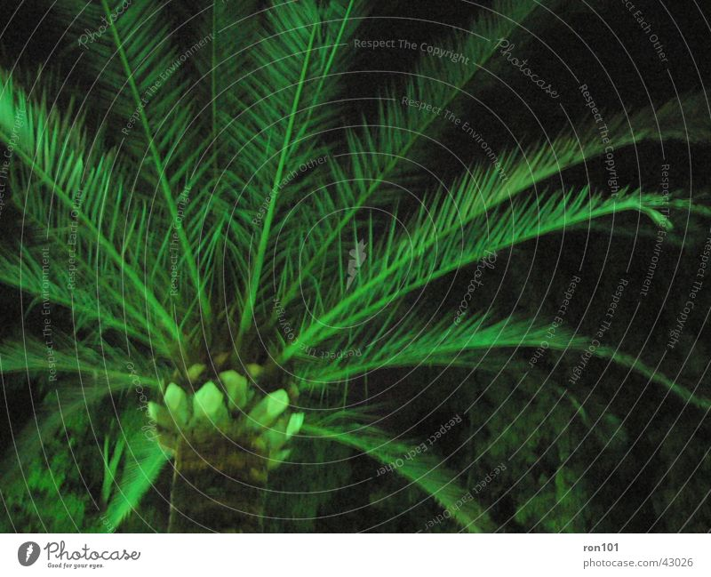 palm Palm tree Palm frond Green Dark Tree trunk Lighting
