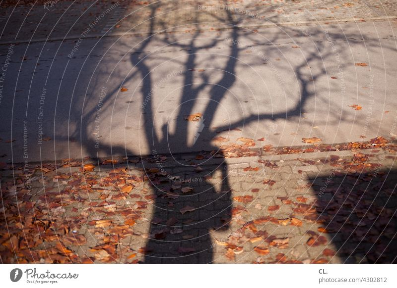 photographer in tree Shadow Shadow play Tree Branches and twigs Autumn leaves Autumnal person Take a photo Lanes & trails