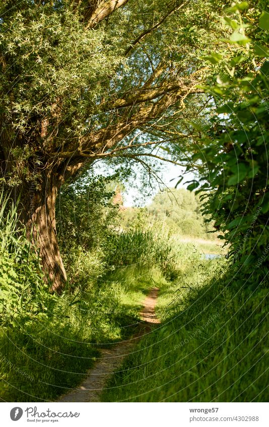 Narrow path between greenery on the banks of the Warnow river Lanes & trails ravine Green Green plants bushes trees along the bank Warnov Deserted Exterior shot