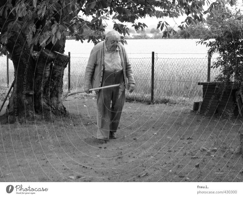 in the garden Masculine Male senior Man Life 1 Human being 60 years and older Senior citizen Summer Tree Garden Workwear Old Work and employment Love Dirty
