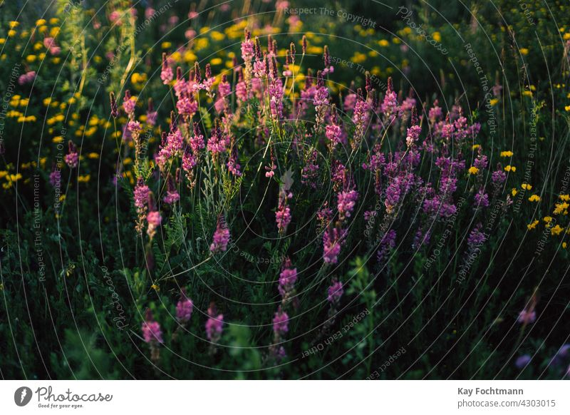 pink wild flowers on meadow abundance background backgrounds beautiful beauty in nature bloom blooming blossom calm color colored colorful countryside day