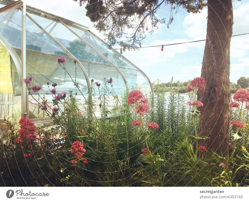 hothouse garden Greenhouse flowers Tree Nature Greenhouse effect Plant Colour photo Exterior shot Deserted Garden naturally Flower Blossoming Summer Detail pink