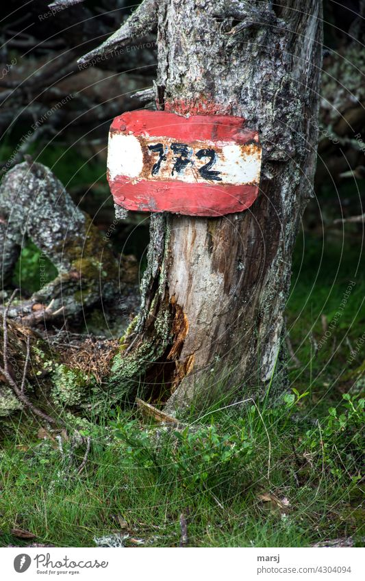 Old trail marker on even older dead tree. Red-white-red and number 772 Route number Signage hiking sign Groundbreaking bark harsh Road marking