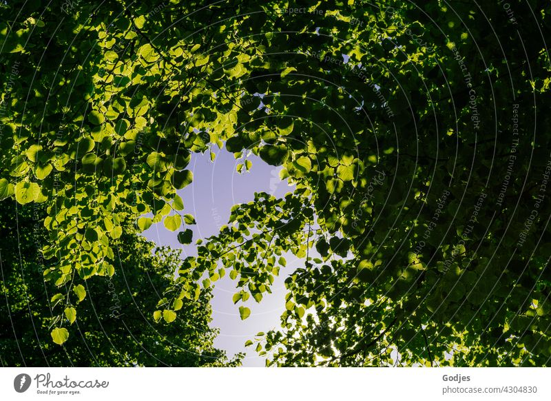 View of the sky through green foliage of the trees Leaf leaves Autumn Deciduous tree Green Tree Nature Plant Colour photo Deserted Brown Yellow Multicoloured