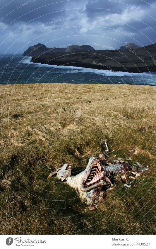 Sky Water Ocean Landscape Clouds Animal Far-off places Death Grass Rock Weather Rain Wind Island Transience Hill