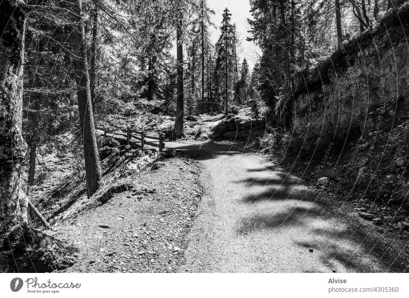 2021 05 08 Cortina wooded road woods mountain nature landscape dolomites italy travel scenic scenery outdoor green europe beautiful forest view rural hill