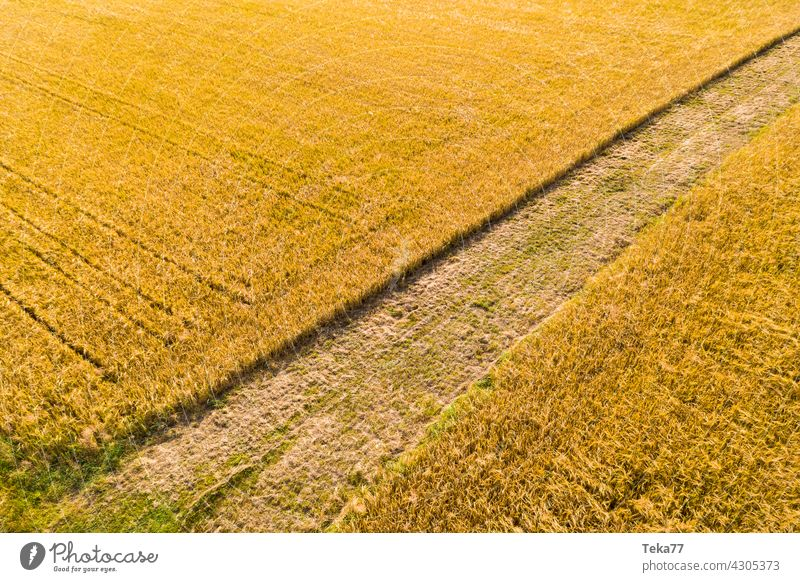 The field acre Agriculture Farmer Wheat Wheatfield wheat fields Arable land Yellow