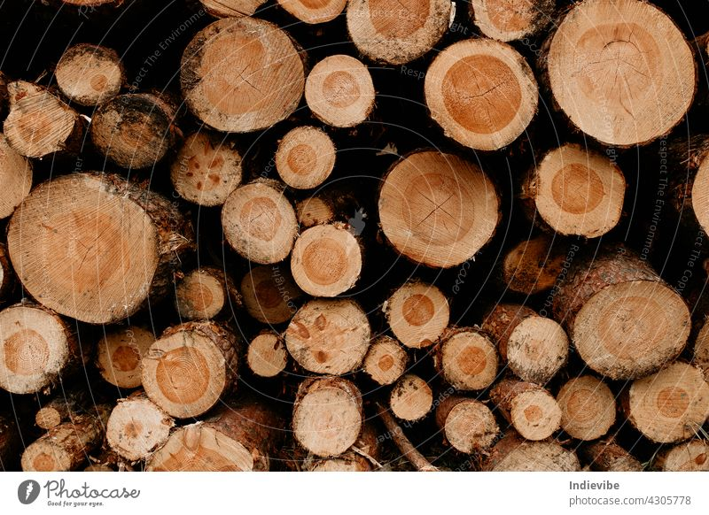 Pile of pinewood logs. Cut logs stacked. Variable size wood. deforestation tree timber woodpile firewood cut lumber nature trunk texture wooden brown bark