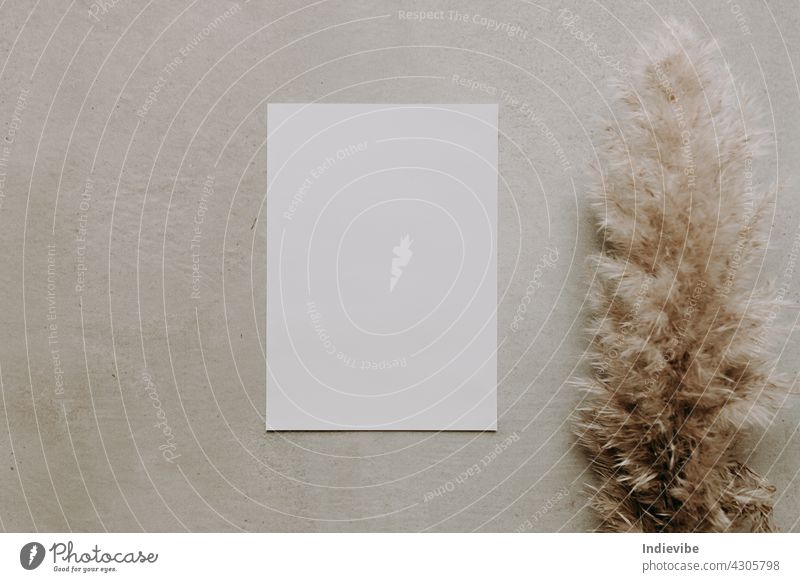 Blank white paper with pampas grass on grey grainy background. Flat lay, top view photo. Dried grass decoration mockup on grey desk. Copy space. blank note
