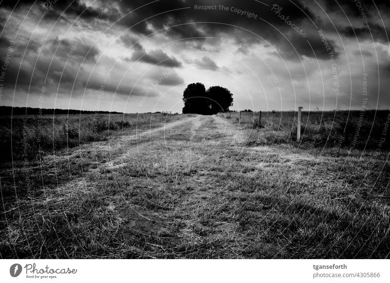 dirt road off the beaten track Clouds cloudy cloudy sky cloudy weather Deserted Landscape Exterior shot Emsland Field Meadow depressing Threat Loneliness