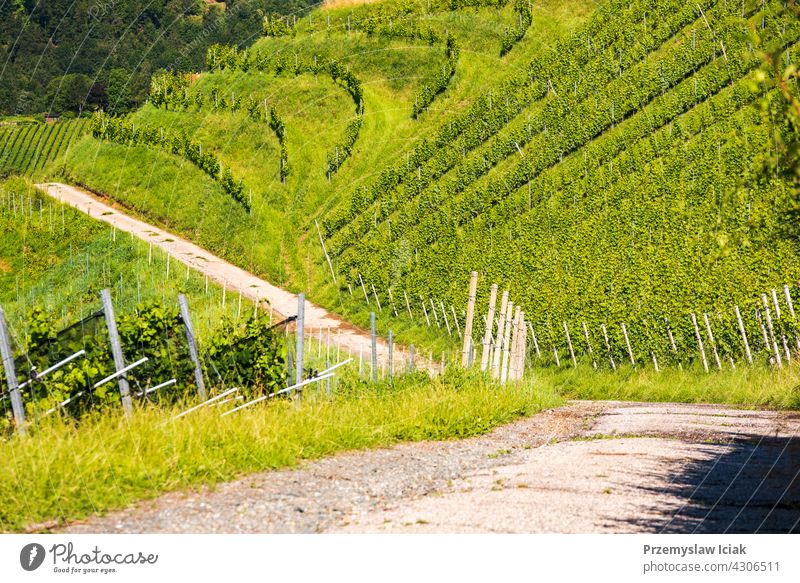 Vineyard on Austrian countryside. Landscape of styrian nature. background tree house pattern summer wine winter sun landscape vineyard austria grapevine green