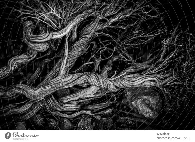 Dead branches, bizarrely twisted and strongly branched, lie on large stones in front of a dark background twigs Wood Log Tree bush shrubby Plant flora Island