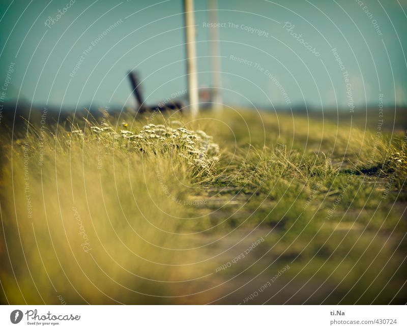 Summer on the dike Landscape Plant Flower Grass Bushes Blossom Foliage plant Coast North Sea Germany Schleswig-Holstein Dithmarschen Blossoming Fragrance Small