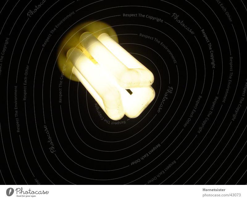 Lamp Living or residing