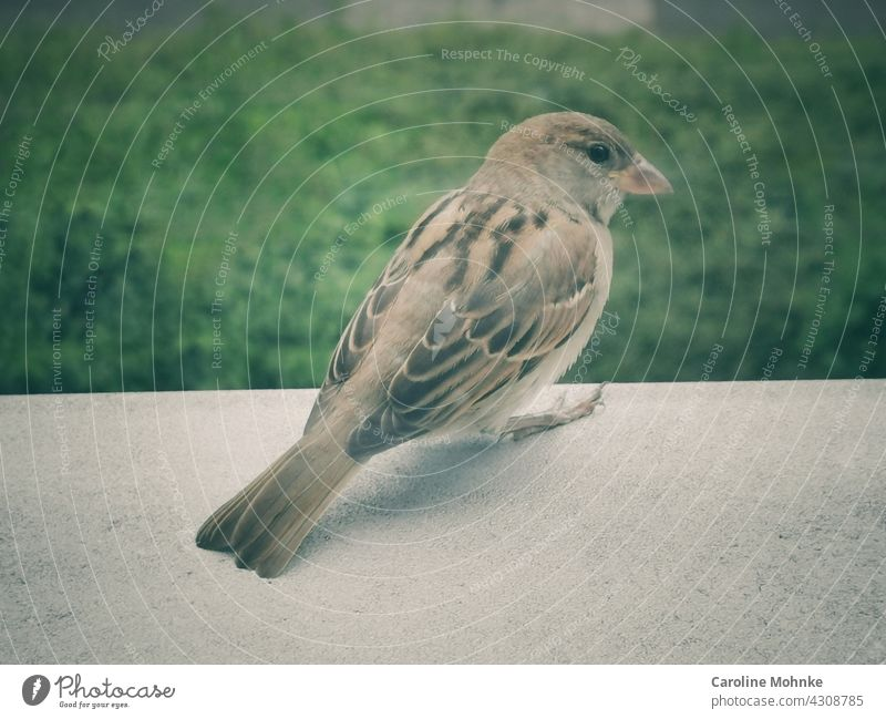 A sparrow sits on a window sill Sparrow Bird Window Windowsill Animal Exterior shot Colour photo Day 1 Deserted Wild animal Animal portrait Nature