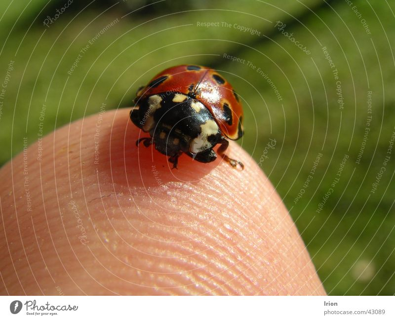 Spring Happy Sweet Insect Fingers Ladybird Beetle May Fingertip