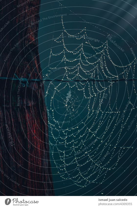 spider web on ton barbed wire fence net nature raindrop rainy bright shiny outdoors abstract textured background water wet minimal fragility structure autumn