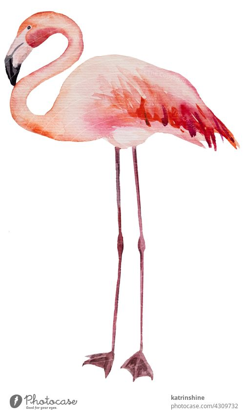 Watercolor pink flamingo isolated illustration Decoration Drawing Element Exotic Hand drawn Isolated Ornament Painted Set Sketch Textile acuqerelle birds