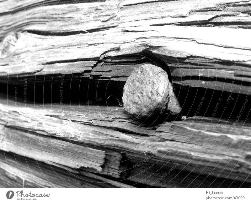 Nail in tree stump Tree Tree stump Tree trunk Wood Tree bark Detail Macro (Extreme close-up) Nature