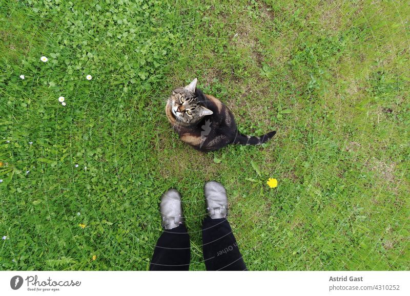 Wide angle shot of a cat sitting in the grass at the feet of a woman Cat Human being Woman Pet inquisitorial Grass Meadow Garden Legs Footwear