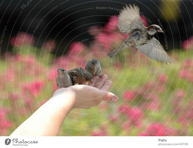 Hand Animal Together Bird Feeding Sparrow
