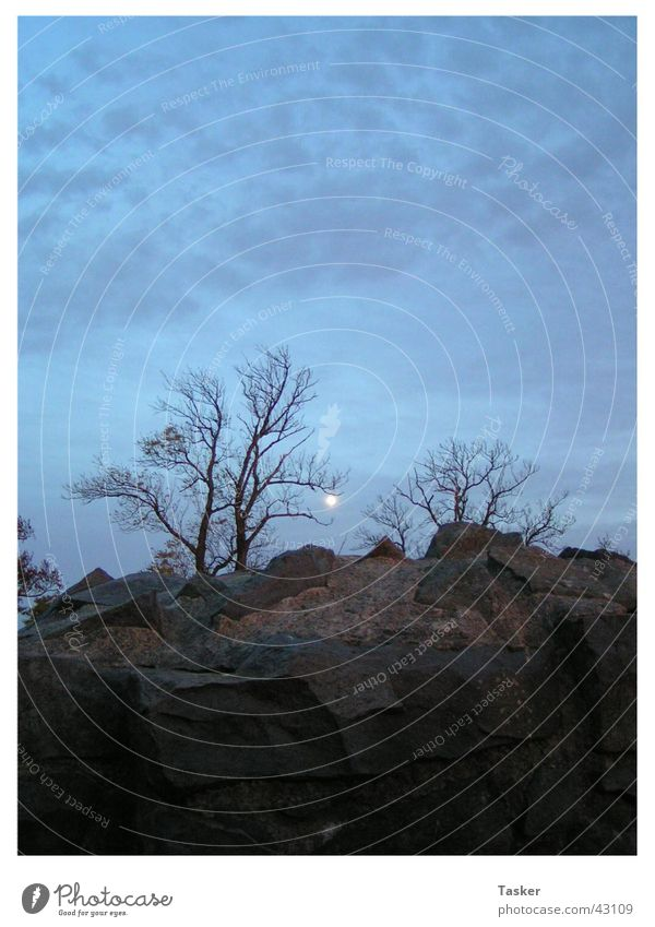 Sky Tree Clouds Mountain Fear Creepy Moon