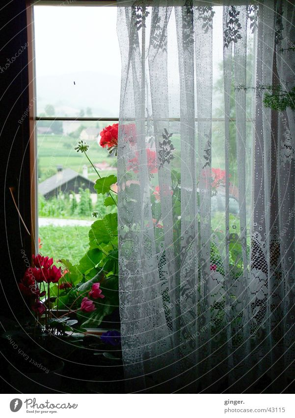 Old Flower Window Dark Bright Simple Curtain View from a window Window seat