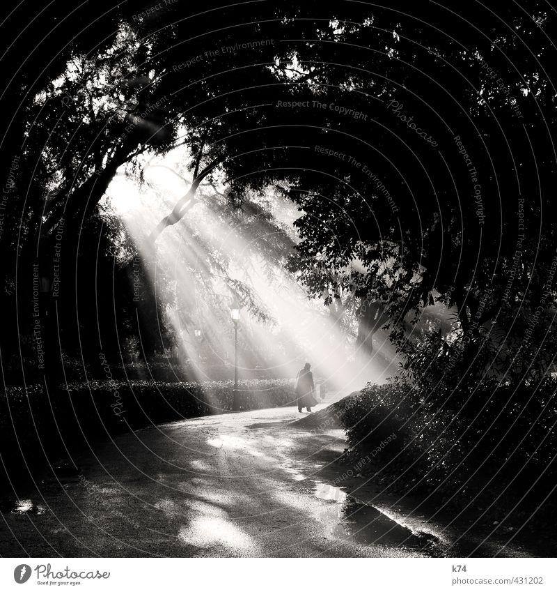 Enlightenment in the park Human being Senior citizen Fog Tree Park Lanes & trails Going Illuminate Hope Target Black & white photo Exterior shot Morning Light