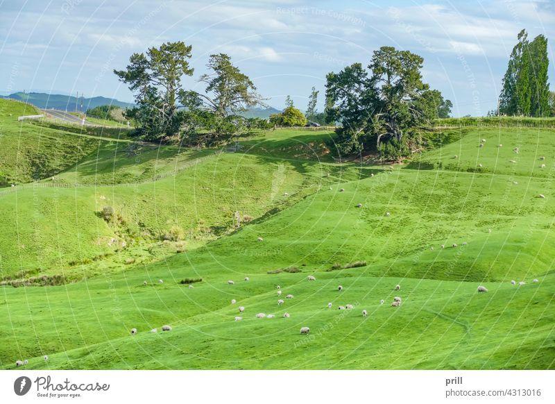 Waikato region in New Zealand matamata waikato new zealand north island farmland pasture meadow idyllic peaceful hill the shire farming area bucolic rural