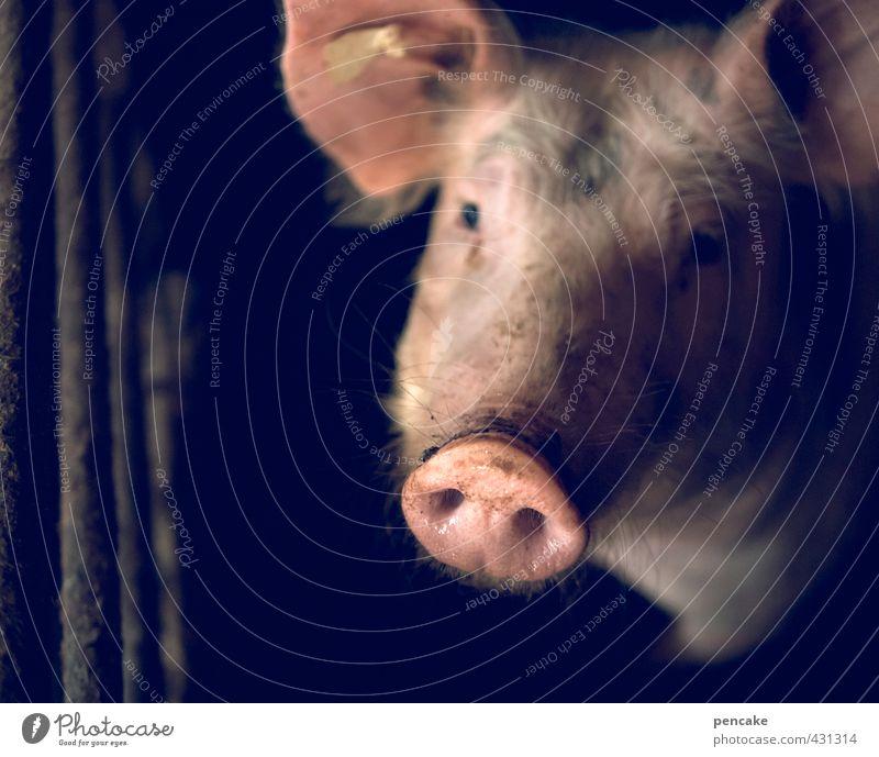Loneliness Animal Dark Sadness Happy Pink Hope Sign Curiosity Agriculture Trust Wanderlust Pet Farm animal Peaceful Swine