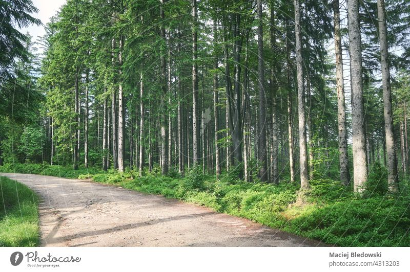 Path in Karkonosze Mountains forest, Poland. nature mountain landscape Krkonose Giant Mountains outdoors tree green wilderness travel Europe path woods scenery