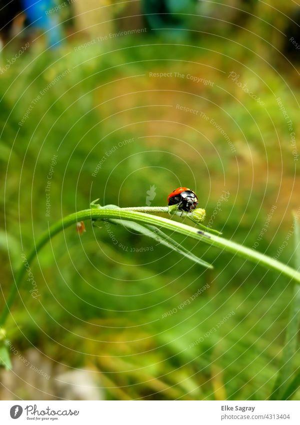ladybugs munching on... Ladybird Beetle Close-up Summer Happy Nature Crawl Plant