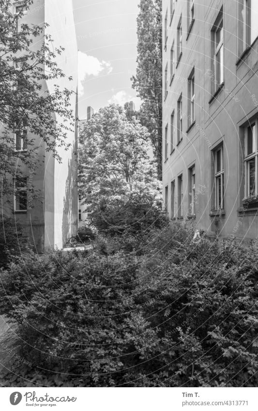 a backyard in Prenzlauer Berg Backyard Berlin b/w bnw Exterior shot Town Day Capital city Deserted Black & white photo Downtown Old town Manmade structures