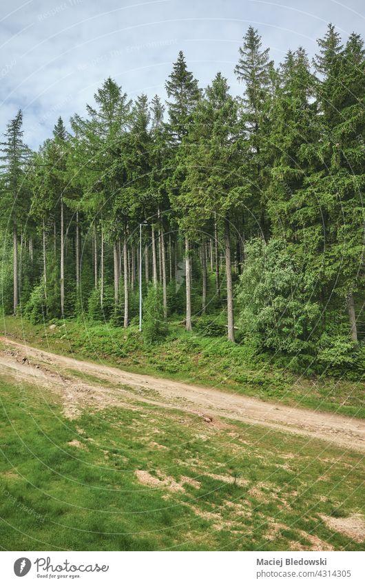 Path in Karkonosze Mountains, Poland. nature forest mountain landscape Krkonose path wanderlust Giant Mountains outdoors tree green wilderness travel Europe