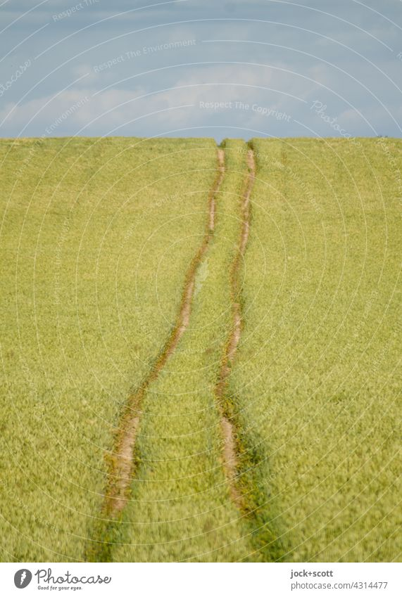 Long tracks in the grain field Landscape Clouds Sky Wheatfield Summer Rut Authentic Warmth Symmetry Lanes & trails Panorama (View) Ecological Agriculture