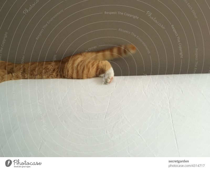 wacky Cat hangover Red Wall (building) Bed Crazy Wild youthful body part Pet Domestic cat Minimalistic Pelt Animal Cute Cuddly Love of animals Effortless
