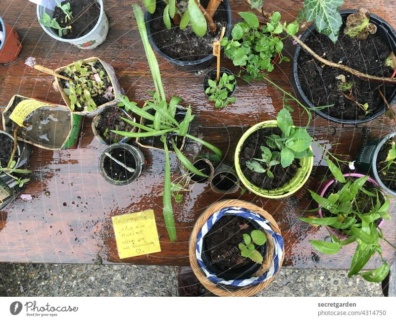 environmental swaps Plant offshoot Growth Table Exchange table Colour photo Nature Green Exterior shot Deserted Wet rainy Spring Environment Garden take