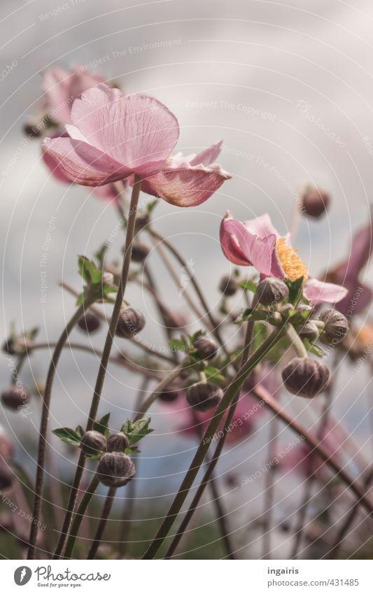 Sky Nature Green Plant Summer Flower Yellow Autumn Gray Blossom Natural Garden Pink Illuminate Growth Esthetic